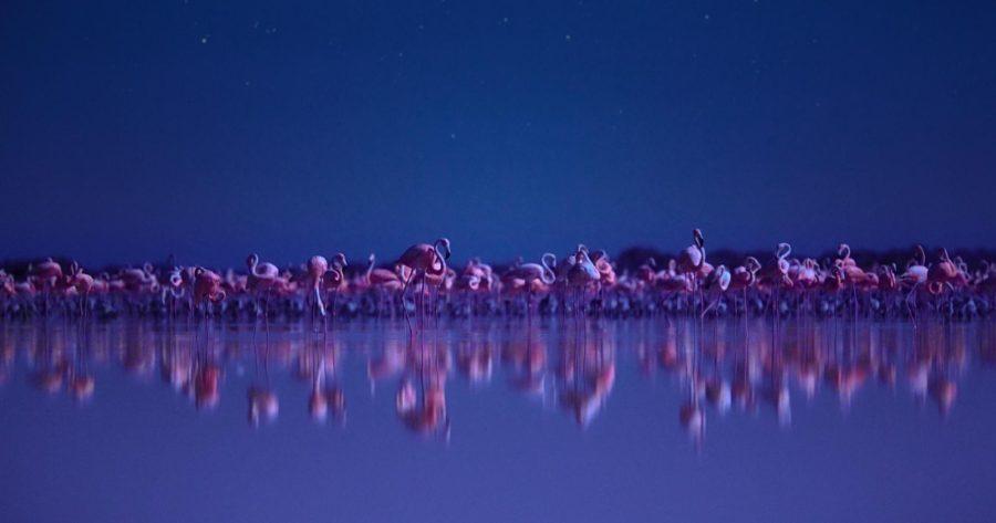 Imagen del documental de Netflix Night on Earth. Documentales sobre el planeta.